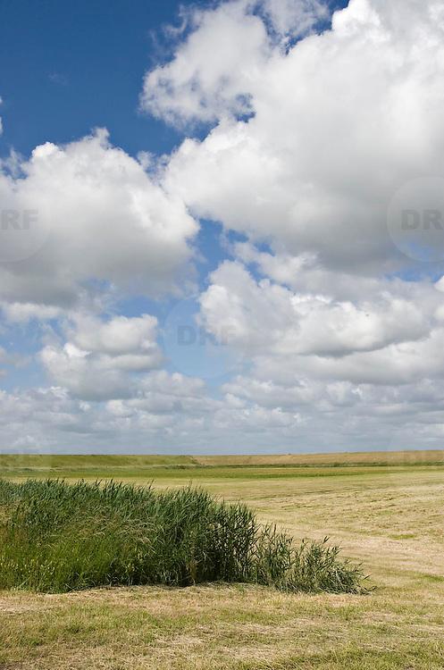 Nederland Walsoorden   gemeente Hulst  19 juni 2010 20100619   ..    Serie landschappen provincie Zeeland. Zeeuws-Vlaanderen, landschap polderlandschap scenery met op de achtergrond de dijk van de westerschelde.   wisselvallig veranderlijk weer. Op de voorgrond een rietkraag, riet. Illustratief beeld  waterveiligheid, hollandse landschappen.  skies, space, sprankelend, sprankelende, stijging zeespiegel, stil, stilleven, stilte, stock, stockbeeld, streek, sunny, sustainable, terrein, typerend, typical dutch landscape, typisch hollands, typisch hollands landschap, typische, uitgestrektheid, uitzicht, uniek, unieke, veiligheid, veld, vergezicht, vergezichten, verte, vrij, vrijheid weer, waaien, water level, waterbeheer, Waterbeheerplan, waterhuishouding, waterkering, Waterkeringen, waterkeringen, waterlevel, watermanagement, waterniveau, waterpeil, waterplan, waterproblematiek, waterstaatkundige, waterstand, watersysteem, waterveiligheid, waterveiligheid en gebiedsontwikkeling, waterwerken, weersomstandigheden, wei, weide, weidegang, weiland, weiland. Landscape, wijdheid, wijds, wijdsheid, wind, wit, witte, wolk, wolken, wolkenpartij, zeeland, zeeuws vlaanderen, zeeuws-vlaanderen, zeewering, zo vrij als een vogel, zonnig, zonnige dag, zware, zwitserleven gevoel ..Foto: David Rozing