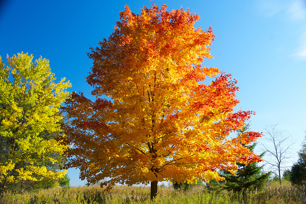 The vibrant colors of deciduous trees in the autumn. Photo by Adel B. Korkor.
