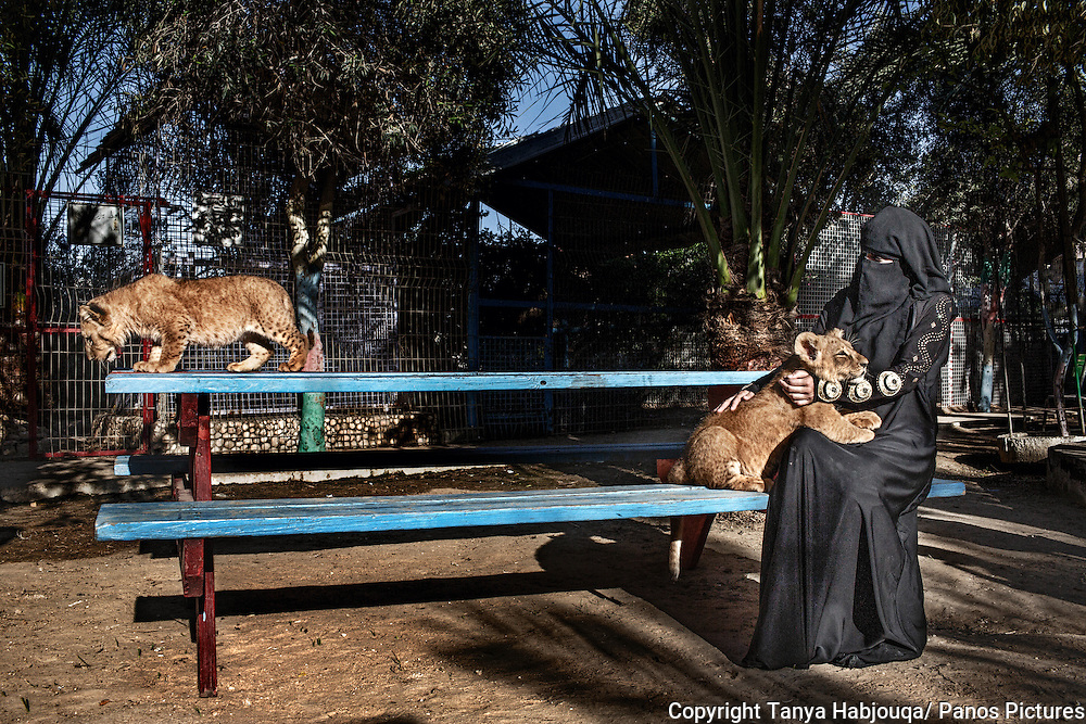A woman plays with two baby lion cubs born in the Rafah Zoo in Gaza.  Gazan Zoo keepers are renowned for creativity, faced with limited options; having famously painted a donkey as a zebra, smuggling in animals through the tunnels, and stuffing them once they are dead, as animals are difficult to replace.