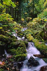 Wahkeena Stream and Waterfall, Columbia River Gorge National Scenic Area, Oregon, US