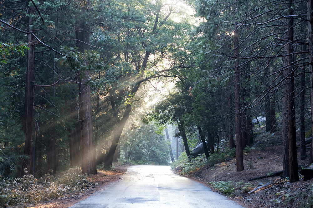 Sunbeams break through trees over a road through Cedar Grove in Kings Canyon National Park