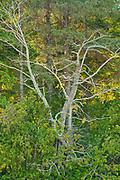 Tree<br />Graham Island on Haida Gwaii<br />British Columbia<br />Canada