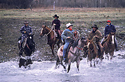 Cowboys rounding up cattle and riding through a creek in Cremer Ranch, Melville, Montana, USA