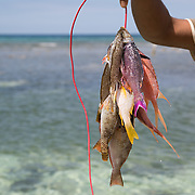 """Jamaica fisherman with his daily catch.<br /> <br /> For all details about sizes, paper and pricing starting at $85, click """"Add to Cart"""" below."""