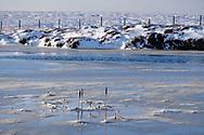Frozen reeds - Snake Pass
