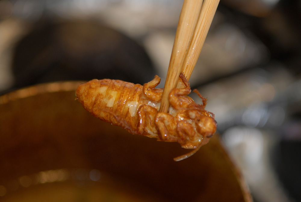 """Deep frying a Madagascar cockroach.Tokyo resident Shoichi Uchiyama is the author of """"Fun Insect Cooking"""". His blog on the topic gets 400 hits a day. He believes insects could one day be the solution to food shortages, and that rearing bugs at home could dispel food safety worries."""