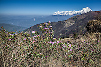 Wonderful views of the Dhaulagiri range from Bayli Kharka, Nepal.