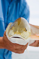 Close-up of a redfish caught off the Texas Gulf Coast.