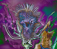spiny abstract. Blue and violet fluid floating shape on violet dappled background.