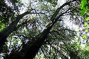 Belo Horizonte_MG, Brasil...Jardim Botanico de Belo Horizonte. ..Botanical garden in Belo Horizonte...Foto: LEO DRUMOND / NITRO