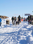 Matt Groth of Grand Marais, MN, sets off first on his ten-dog class sled race on Sunday, 2 Feb 2014. Scenes from the Apostle Islands Sled Dog Race, hosted by the Bayfield Chamber of Commerce, near Bayfield, WI
