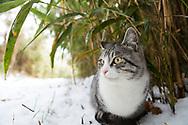 """En katt i bambuskogen på Tashirojima. Ön som kallas för """"kattön"""" eftersom här lever hundratals katter tillsammans med ca 50 personer.   <br /> Ishinomaki, Miyagi Prefecture, Japan. <br /> Fotograf: Christina Sjögren<br /> Copyright 2018, All Rights Reserved"""