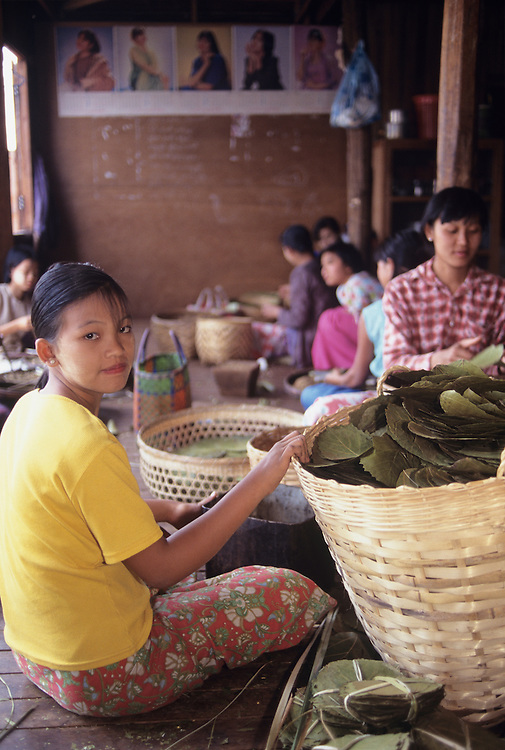 Girls making cheroots in cigar factory, Inle Lake, Shan State
