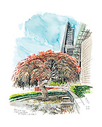 Red leaf Japanese maple at Seattle City Hall.<br /> Gabriel Campanario / The Seattle Times