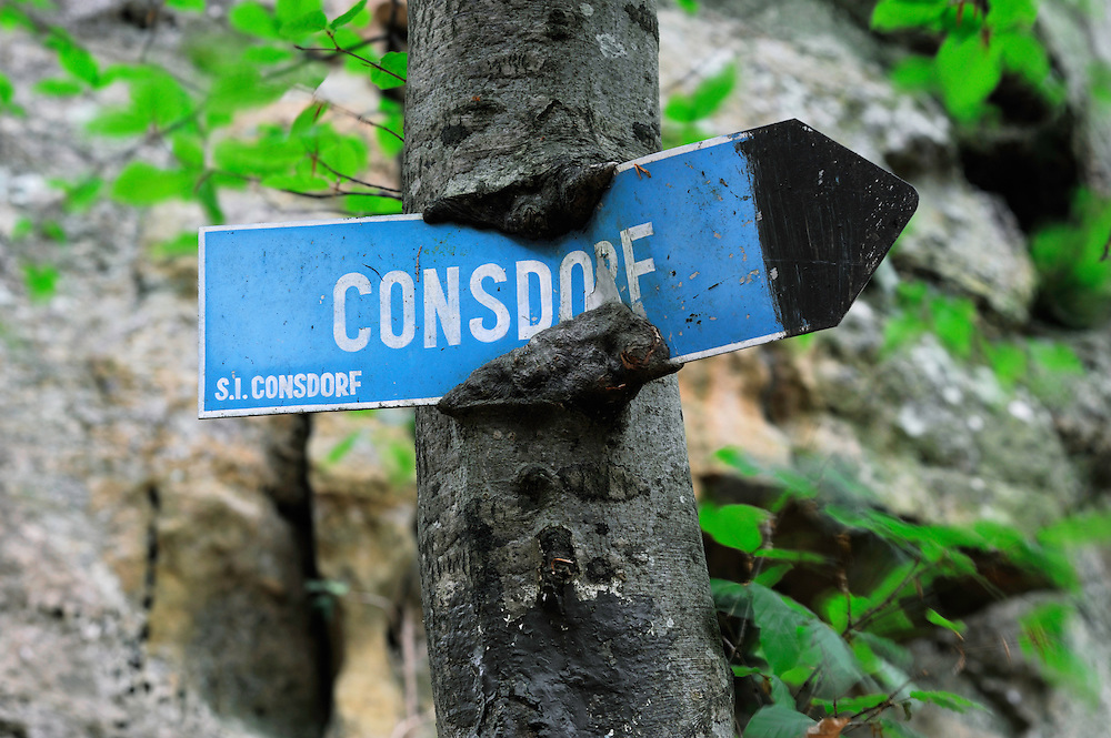 Sign to Consdorf and Beech tree (Fagus sylvatica), Mullerthal trail, Mullerthal, Luxembourg