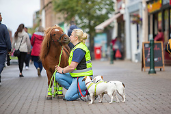 Sarah Harrison with Glen, her Shetland Pony, that she takes out for walks. Pic on the High Street.