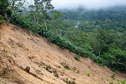A landslide on the coffee farm of a COCASJOL member near Colinas, Santa Bárbara, Honduras.