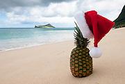 A pineapple sits on Waimanalo Beach with a Santa hat.