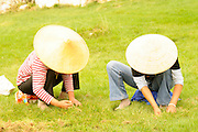 China, Yunnan province, Kunming, Local gardeners weeding in a park