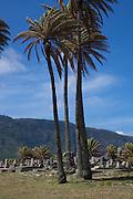 Cemetary, Kalaupapa Peninsula, Molokai, Hawaii