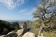 Habitat of Majorcan midwife toad (Alytes muletensis). Torrent de s'Esmorcador, Majorca, Spain. The Majorcan midwife toad (Alytes muletensis) is endemic to the rocky sandstone terrain of the Serra de Tramuntana in the northwest of Majorca. Majorca, Spain   Die Mallorca-Geburtshelferkröte (Alytes muletensis) lebt ausschließlich in der Sandstein-Felslandschaft der Serra de Tramuntana im Nordwesten Mallorcas. Erst im Abendlicht erreichen die Wissenschaftler wieder die Straße, von der aus sie, die eingefangenen Kaulquappen im Gepäck, mit dem Auto nach Las Palmas zurückkehren.