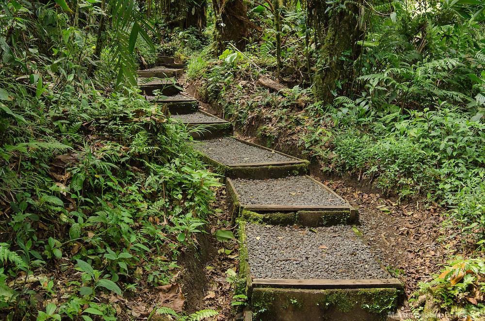 The Encantado Trail, Santa Elena Cloud Forest Reserve, Costa Rica