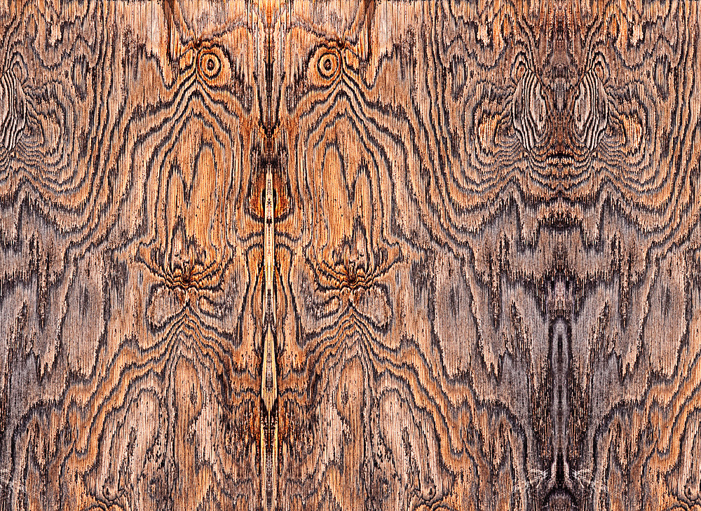 """""""Wildebeest and Tiger"""", derivative image from a photo of a sheet of plywood, Clallam County, Olympic Peninsula, Washington, USA"""