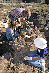 Don DeWitt, Tanya Stay & Donna Rothberg Working On Triceratops
