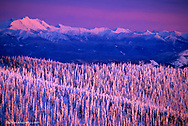 Alpenglow light strikes the pine trees from the summit of Big Mountain at Whitefish Mountain Resort in Montana