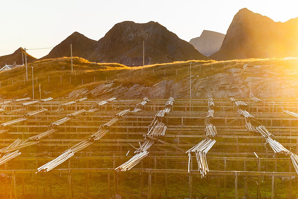Traditional wood racks used for drying fish in Sorland, Vaeroy Island, Lofoten Islands, Norway.