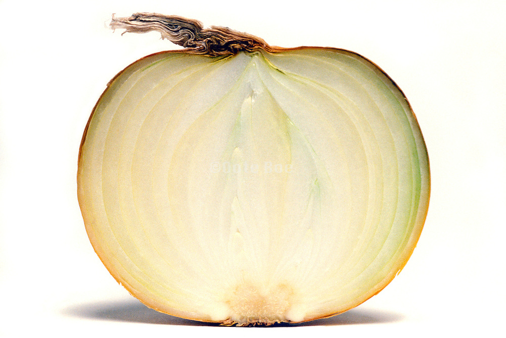 cross section of a onion