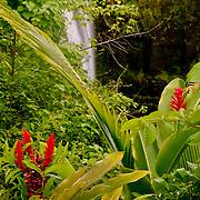Lovely Rainbow Falls on the Big Island of Hawaii, HI
