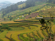 Rice Terraces, Yuanyang, Yunnan Province, China