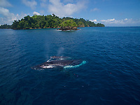 Young Humpback whale with mother.<br /><br />With Rancheria Island in back.<br />Coiba National Park<br />Panama