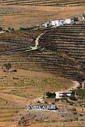 vineyards quinta vista alegre douro portugal