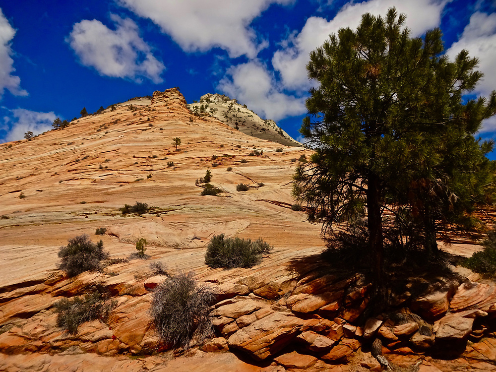Southern Utah, National Parks, Zion National Park