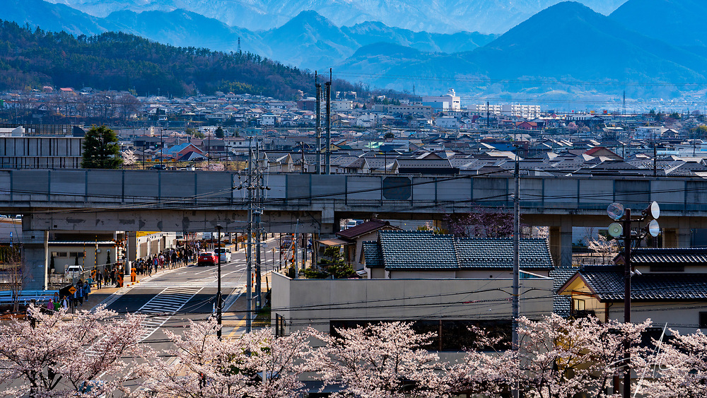 People in the Nagano of Japan travelling between various Sakura hotspot during the Full Blossom period.