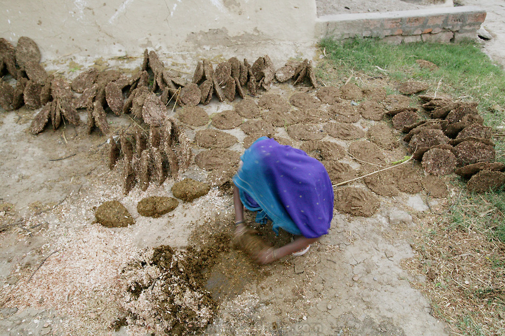 IND.MWdrv04.072.x..A woman forms patties of cow dung then sun dries and stacks them for use as cooking fuel. Ahraura Village, Uttar Pradesh, India. Work. {{Ahraura is the home village of the Yadav family. The Yadavs were India's participants in Material World: A Global Family Portrait, 1994 (pages: 64-65), for which they took all of their possessions out of their house for a family-and-possessions-portrait.}}.