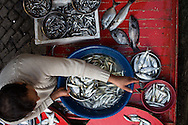 Hamsi or anchovies (upper) sold from a mobile fish cart in Giresun
