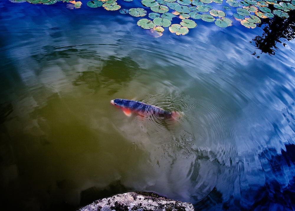 Koi Pond No.2