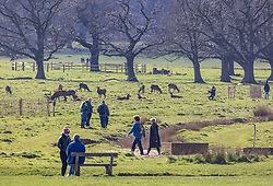 © Licensed to London News Pictures. 19/03/2021. London, UK. Members of the public enjoy the deer in the sunshine in Richmond Park, South West London as the UK welcomes the first day of Astronomical Spring tomorrow with weather forecasters predicting cold mornings but with a mild 12c for the week ahead. Photo credit: Alex Lentati/LNP