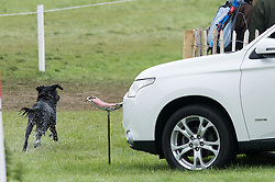 A dog sets off in pursuit of Nicola Wilson and Beltane Queen<br /> Cross Country - CCI4* <br /> Mitsubishi Motors Badminton Horse Trials 2014 <br /> © Hippo Foto - Jon Stroud