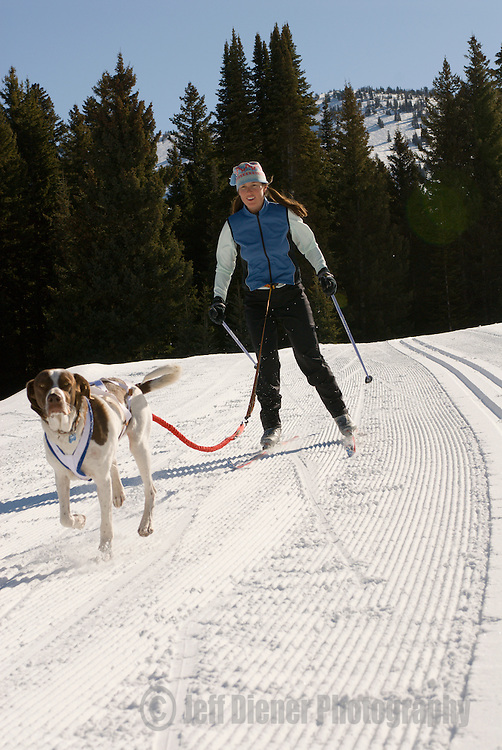 A young woman goes ski joring with her dog at Grand Targhee Resort, Wyoming.
