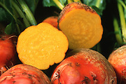 Close up selective focus photograph of Golden Beets with one cut in half exposing the inside