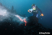 """shimmering heat waves rising off erupting pillow lava distort the image of videographer Shane Turpin, filming underwater eruption at Kilauea Volcano, Hawaii Island ("""" the Big Island """"), Hawaii, U.S.A. ( Central Pacific Ocean ) <br /> MR 352"""