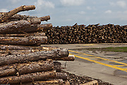 Stacks of logs stored for dryiing at a dissused airfield in Suffolk before being chipped for use in wood chip boilers.  Suffolk county council sustainable wood chip production.