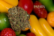 Papaya nug photo in fine art photography, Shot in a professional studio.