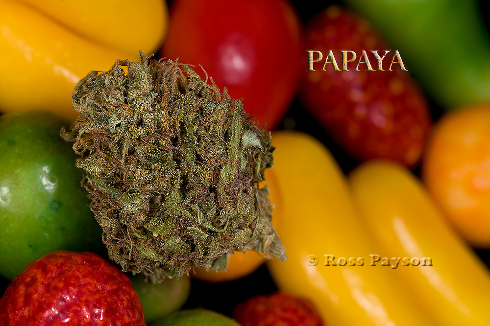 Papaya nug photo in fine art photography, Shot in a professional studio.