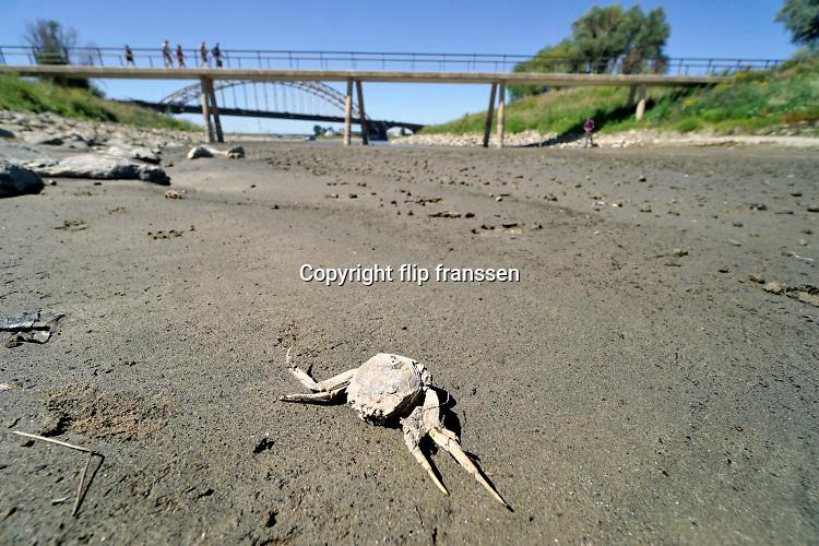 Nederland, nijmegen, 5-8-2020 Opnieuw komt er een periode van droogte en hoge temperatuur, hittegolf . Deze kleine nevengeul in de Waal is gopeddeels drooggevallen. Een karkas van een krab ligt op de bedding .Recreanten zijn via het bruggetje op weg naar het waalstrand . Vooral jonge mensen zoeken verkoeling aan de oevers van de waal op deze tropisch warme nazomerdag . Het is eigenlijk verboden in de rivier te zwemmen vanwege de stroming en het drukke scheepvaartverkeer . Deze strandje liggen tussen de kribben in de Stadswaard . Foto: ANP/ Hollandse Hoogte/ Flip Franssen
