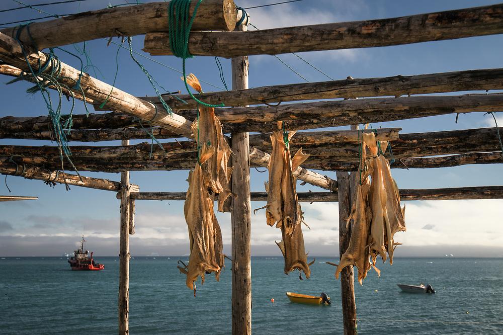Dry fish at Qaersut, Greenland